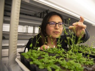 Biochemists Study Plants to Understand Agriculture, Energy, Cell Biology