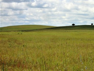 two trees on horizon of a grassland